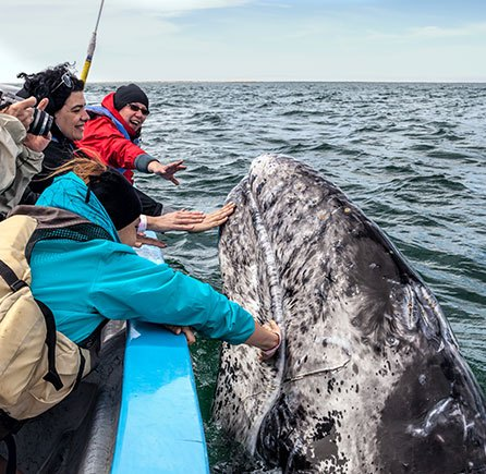 Whale Watching at Andrews By the Sea, New Brunswick
