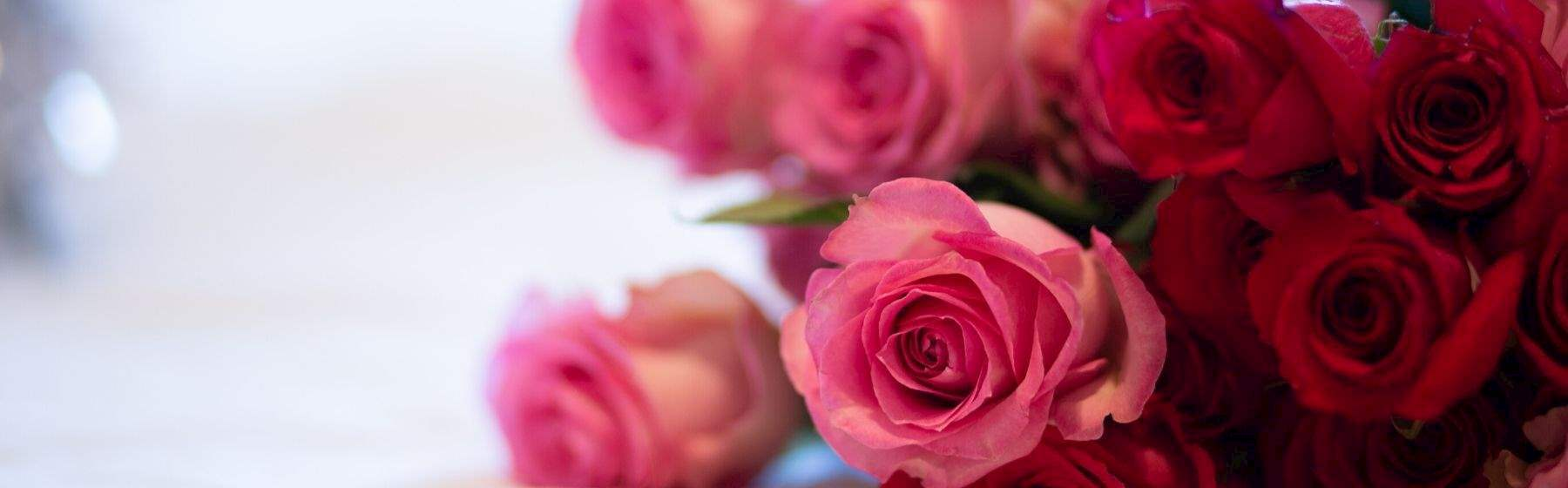 Valentines Day at Algonquin Resort